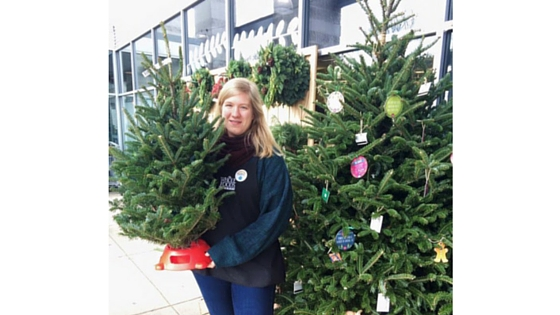 Christmas Trees For Sale At Whole Foods Market In Plymouth